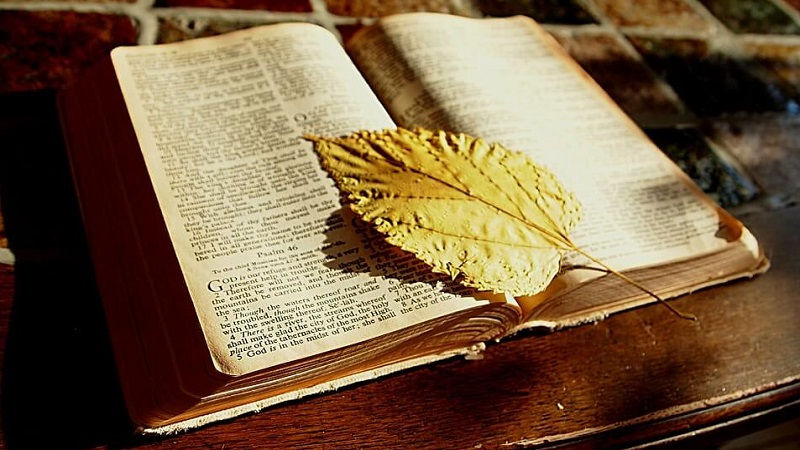 bible22