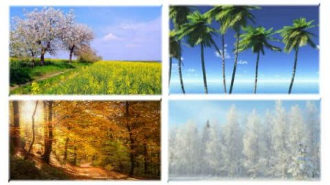 beautiful four seasons