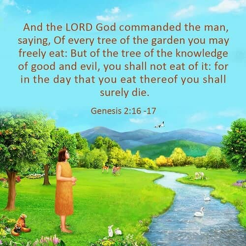 Bible Verse of the Day - Genesis 2:16 -17: God's Care