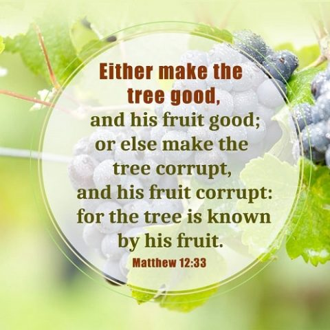 Matthew 12:33,a tree is known by its fruit