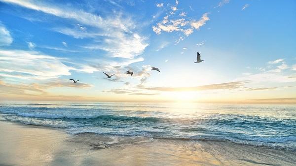 dawn and sea