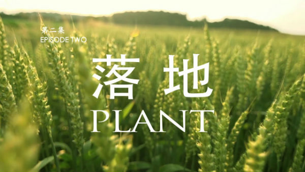 missionary episode ii plant