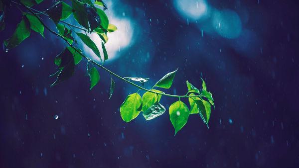 https://www.hearthymn.com/wp-content/uploads/2018/08/raining-leaf.jpg