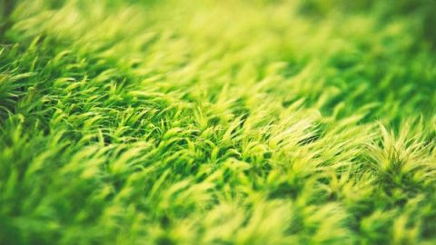 The Tenacious Life Force of the Little Grass Is Amazing