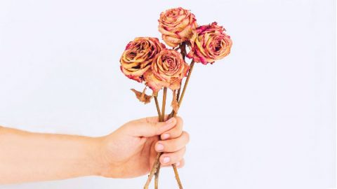 holding some withered flower