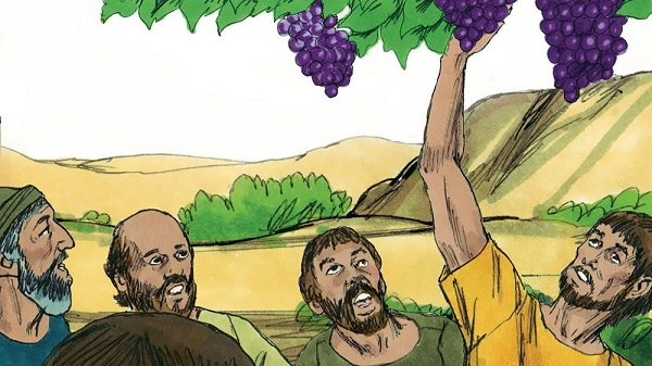 the spies cut down a branch with one cluster of grapes