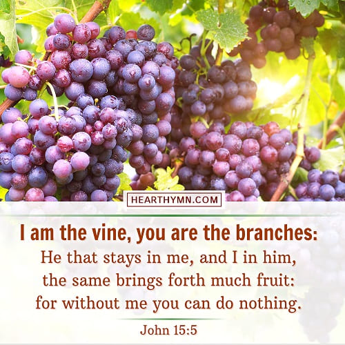 I Am the Vine, You Are the Branches - John 15:5 - Today's Bible Verse