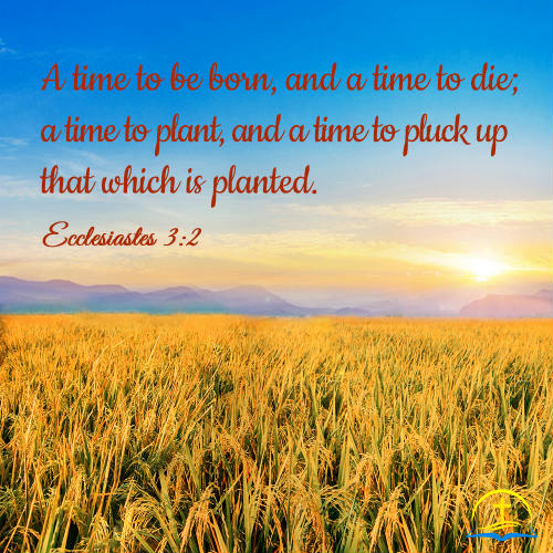 Ecclesiastes 3:1 - Bible Quote Image About God's Ordainment